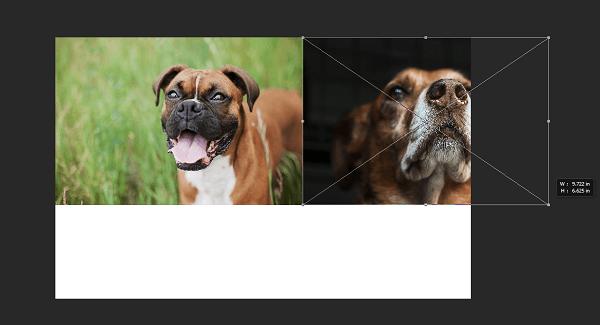 photoshop-cc-resize-photos